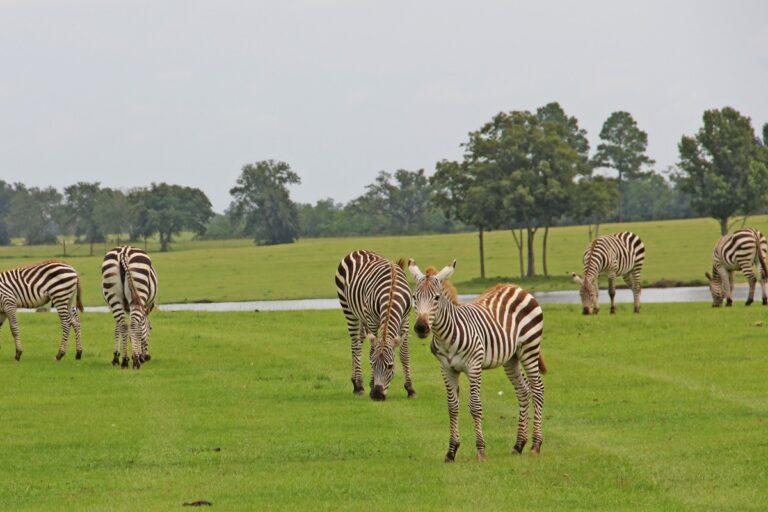 Parcs nationaux d'Afrique